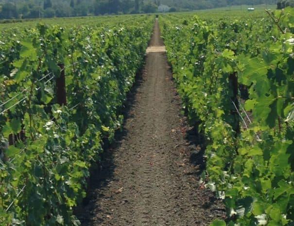 Wine 0917