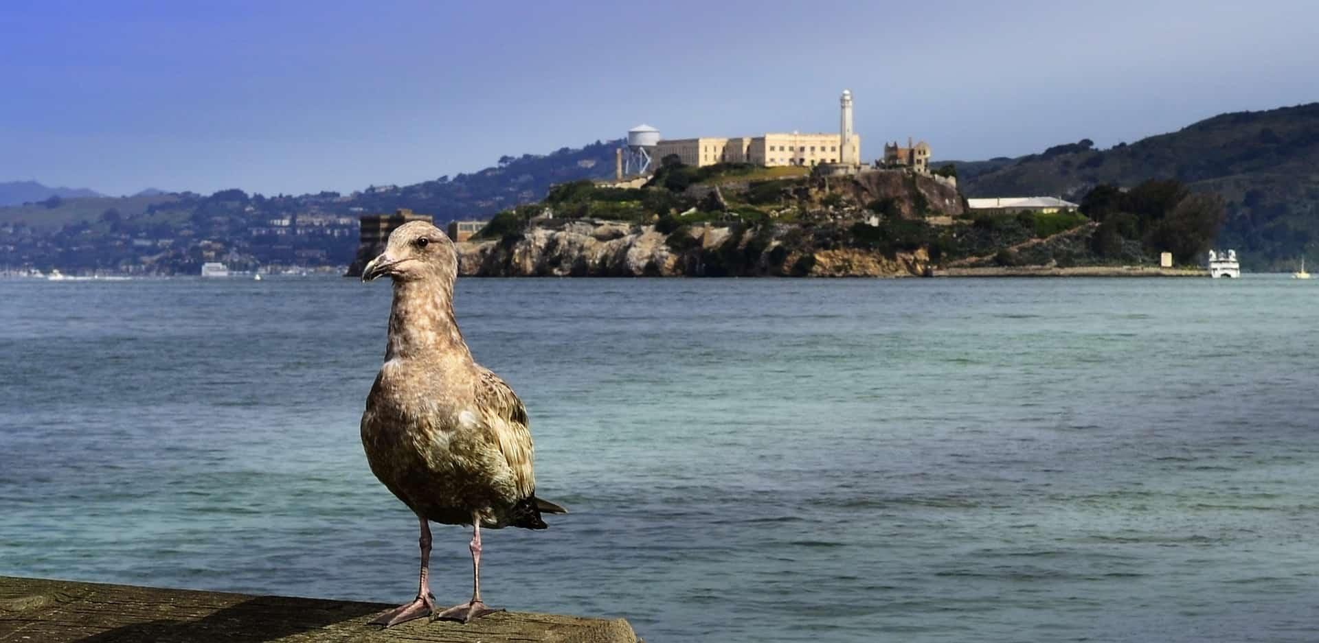 San Francisco And Alcatraz