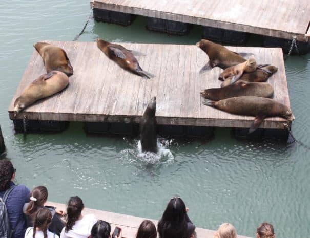 Pier 39 Seals 3158